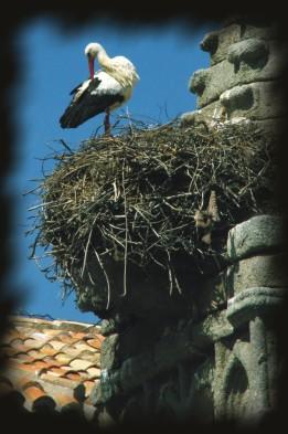 Foto de una cigüeña en su nido, de Josean de Miguel